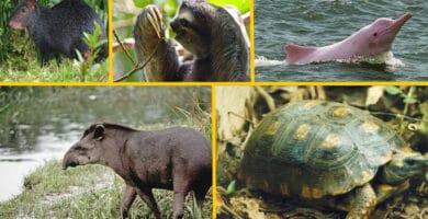animales de la selva peruana
